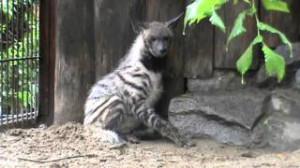 Интересное в Екатеринбургском зоопарке